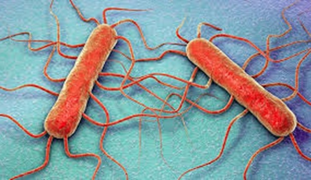 Listeria bacterie in vlees